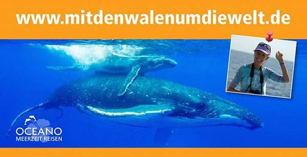 schwimmen-mit-walen-und-delfinen-oceano-whalewatching - mitdenwalenumdiewelt