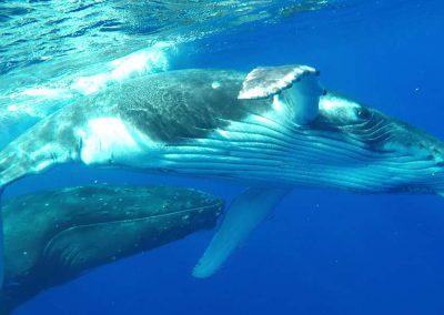 schwimmen-mit-walen-und-delfinen-oceano-whalewatching - galerie 1