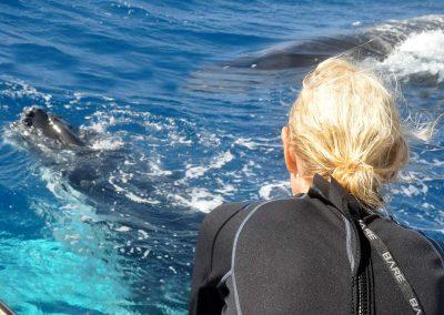 schwimmen-mit-walen-und-delfinen-oceano-whalewatching - galerie 10